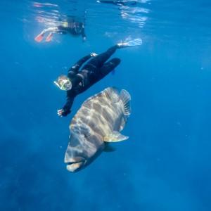 whitsunday getaway catamaran coral