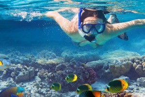 facts about hamilton island - snorkeling in hamilton island