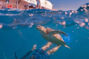 The Ultimate Outer Great Barrier Reef Full Day Including Buffet Lunch