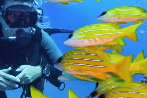Hamilton Island - Full Day Snorkel & Dive the Great Barrier Reef