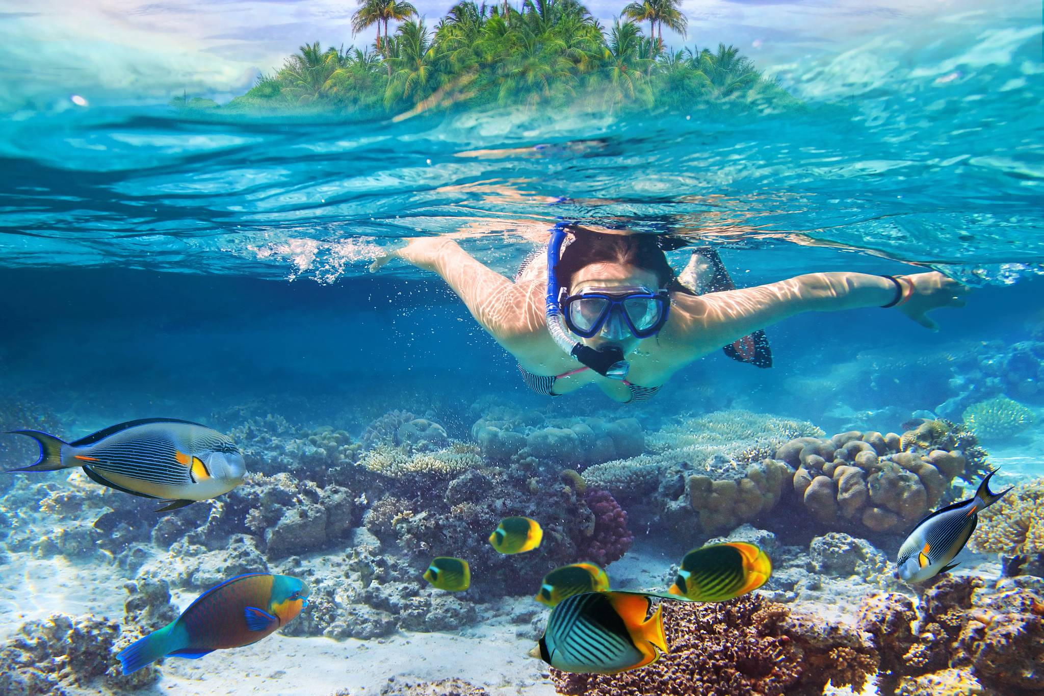 snorkelling in hamilton island